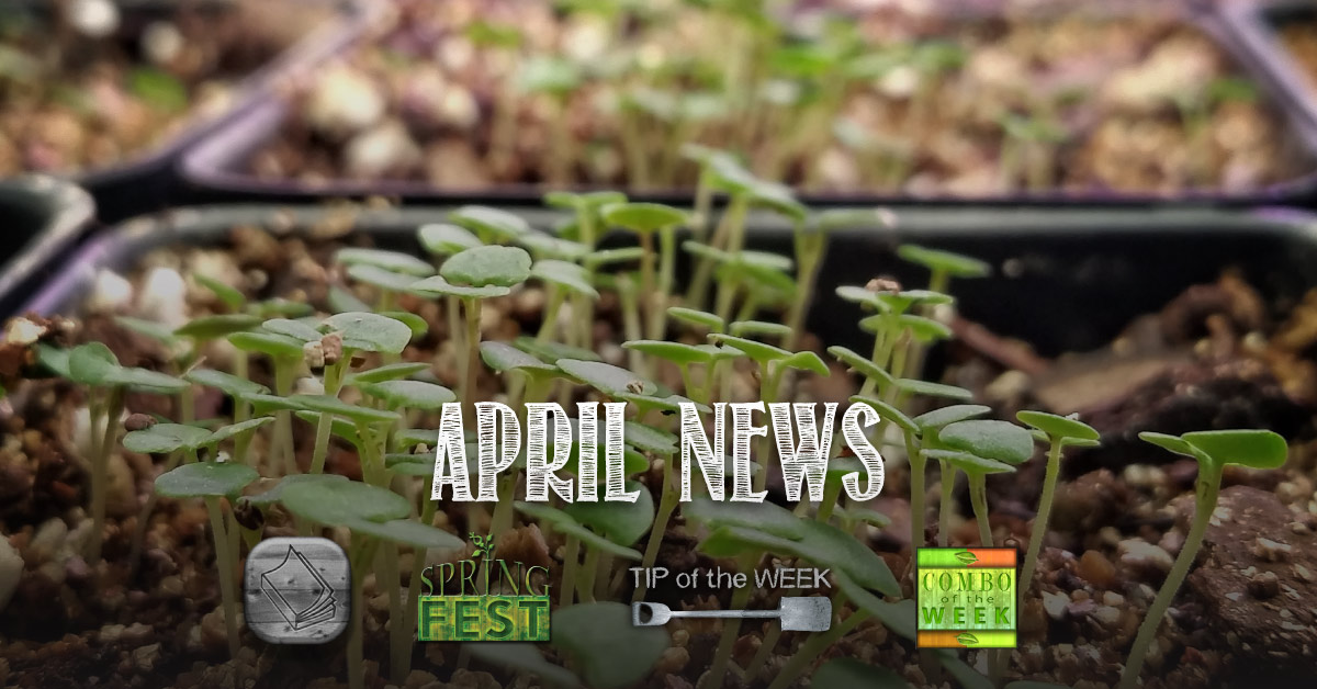 April News: Container Garden Class, Bud Tip, Combo of the Week 2015