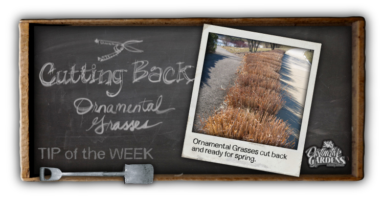 Cutting Back Ornamental Grasses