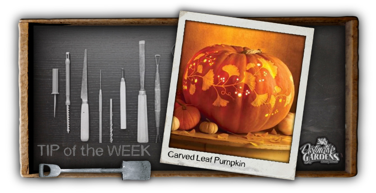 Spooktacular Pumpkins