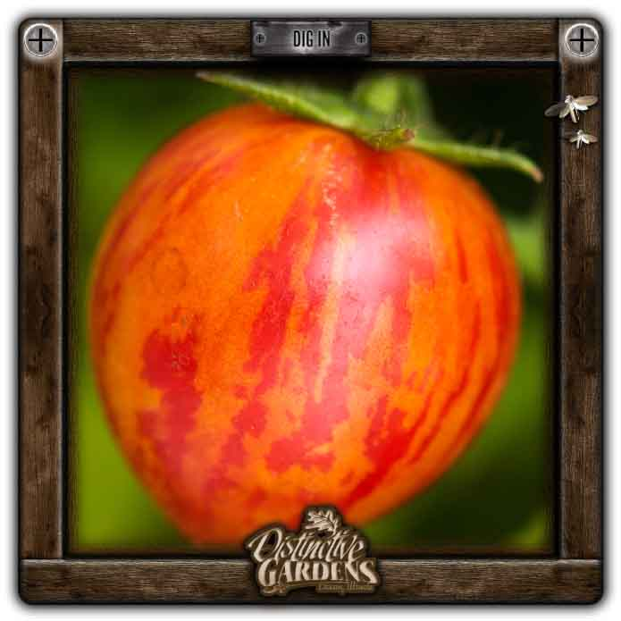 TOMATO Bumble Bee Pink 2
