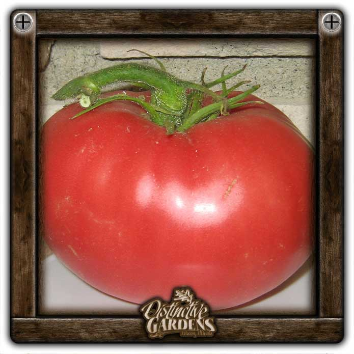 TOMATO Worlds Famous Brimmer 2